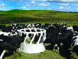 https://www.promaxplastics.co.nz/assets/images/products/Animal_Feed/_prod_detail_large/Bale_Feeder_021-LR.jpg